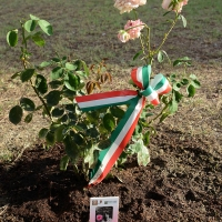 Foto Nicoloro G. 04/08/2017 Mandriole ( Ravenna ) Commemorazione della morte di Anita Garibaldi avvenuta il 04/08/1849 nella Fattoria Guiccioli in localita' Mandriole. nella foto piantata una nuova specie di rosa intitolata ad Anita.