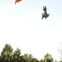 """Foto Nicoloro G.  19/09/2010 Ferrara  Sesta edizione del """" Ferrara Balloons Festival 2010 """", festival internazionale delle mongolfiere. Organizzato dal Comune e dalla Provincia di Ferrara vanta equipaggi provenienti da diverse parti del mondo. Il cattivo tempo meteo aveva impedito nel giorno dell' inaugurazione, il 17/09, il levarsi in aria delle mongolfiere e dei paramotori, ma oggi la manifestazione ha avuto il suo regolare svolgimento. nella foto Due mongolfiere a forma di canguro"""