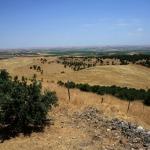 Foto Nicoloro G.   06/07/2019   Sanliurfa ( Sud-Est Turchia )  Gli scavi di Gobekli Tepe, collina tondeggiante in turco, sono il luogo di culto piu' antico mai ritrovato dall' uomo. Il tempio risale a 12.000 anni fa, ancora prima della creazione della ruota. Patrimonio dell' Unesco e' stato inaugurato il 10/03/2019 e aperto al pubblico. Contiene obelischi alti tra 3 e 6 metri con un peso tra le 40 e le 60 tonnellate, con incisioni raffiguranti animali e simboli astratti. Sono posti tra mura dallo sviluppo ovale o circolare. nella foto l' arido paesaggio collinare sede degli scavi.