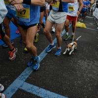 """Foto Nicoloro G.   09/11/2014   Ravenna    Sedicesima edizione della """" Maratona Internazionale Ravenna Città d Arte """". nella foto lungo il percorso."""