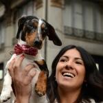 Foto Nicoloro G.   26/05/2019    Milano   Raduno di cani bassotti per una ' Sausage walk ' in pratica una passeggiata con i loro padroni. nella foto messo in mostra dalla sua padroncina.