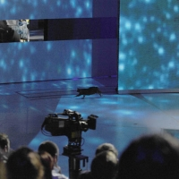 """Foto Nicoloro G. 29/01/2011 Milano Trasmissione televisiva su Rai3 """" Che tempo che fa """" condotta da Fabio Fazio. nella foto Un divertente imprevisto: un gatto nero attraversa all'improvviso lo studio"""